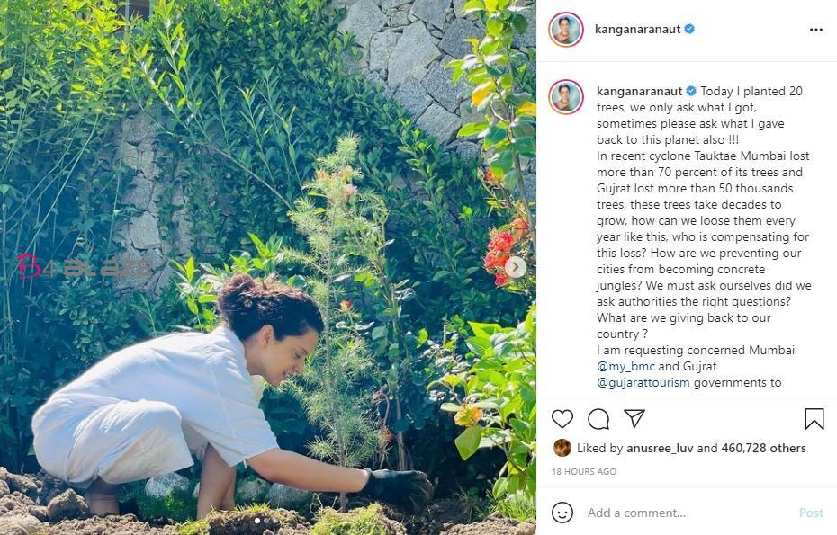 Kanganas new planting tree